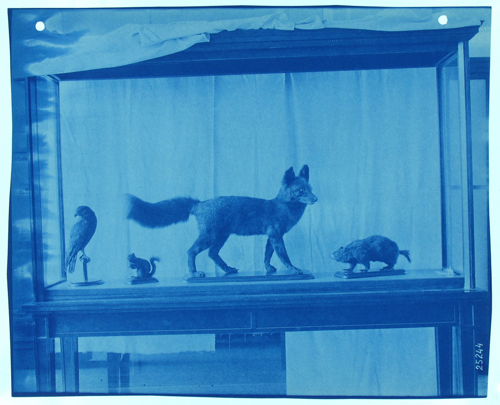 <p>View of Taxidermic Animals Installation c. 1906, courtesy: Smithsonian Institution Archives</p>
