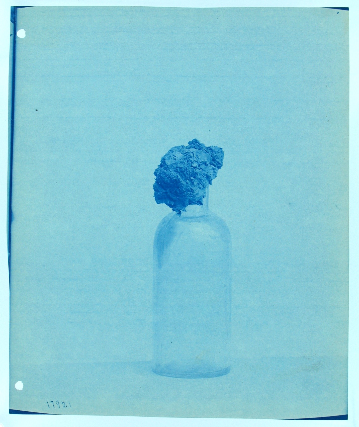<p>Untitled, 1890, cyanotype, courtesy: Smithsonian Institution Archives</p>