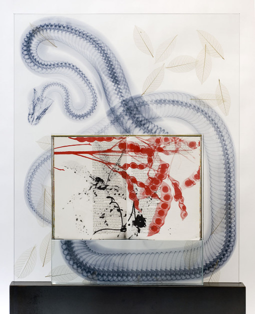 <h5><em>Snake Leaves</em> (detail), 2011, ilk-screened book, jet spray on laminated glass in steel base, 45 x 32 x 5 inches</h5>