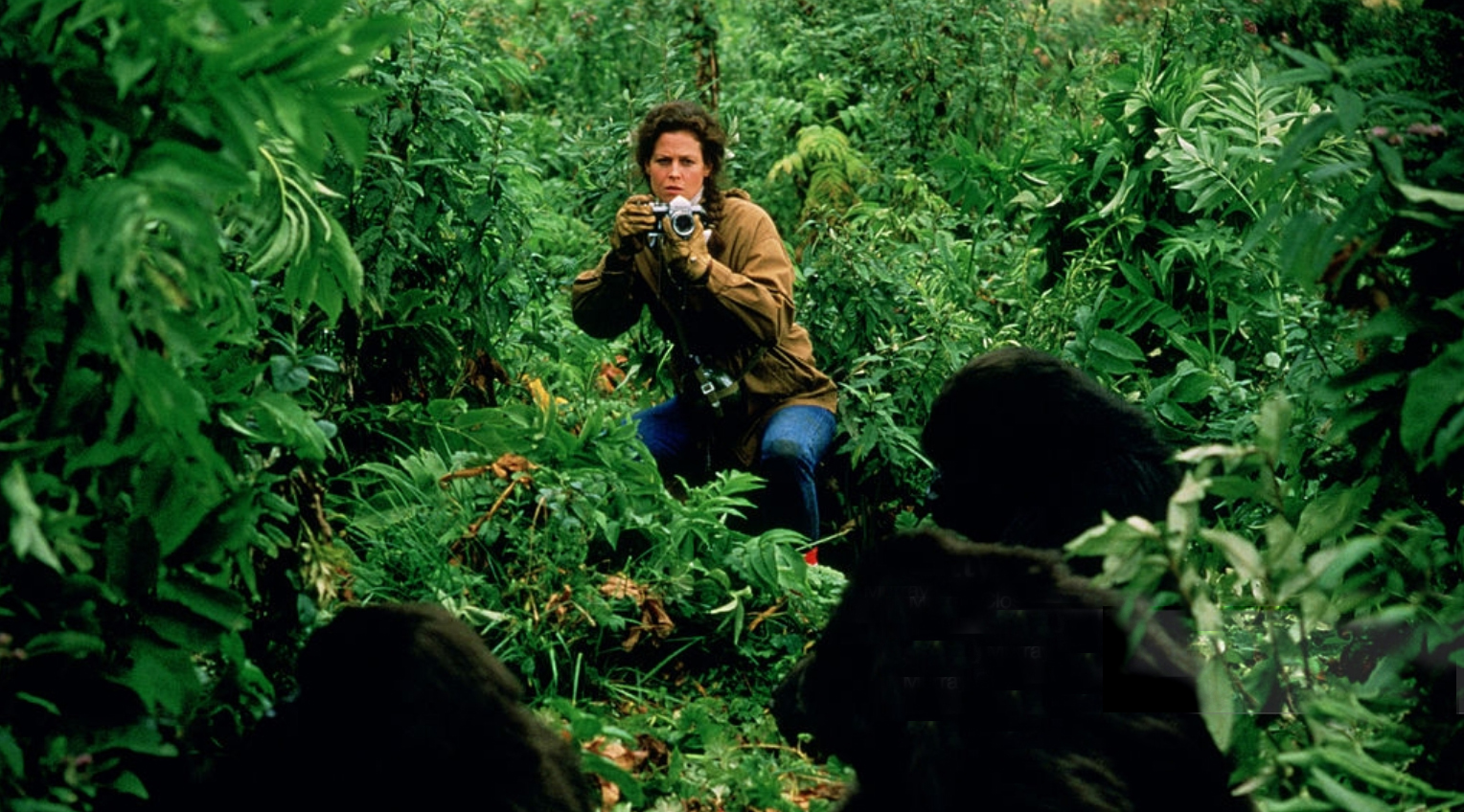 Sigourney Weaver as Diane Fossey