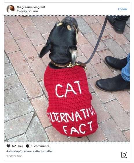 INSTAGRAM CAT ALTERNATIVE FACT