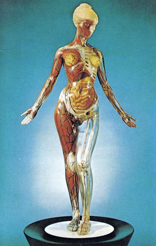 T.A.M. (Transparent Anatomical Mannequin) - vintage postcard